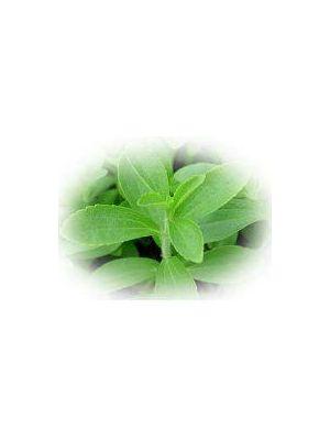 Stevia Steviosid Extrakt Pulver 50g